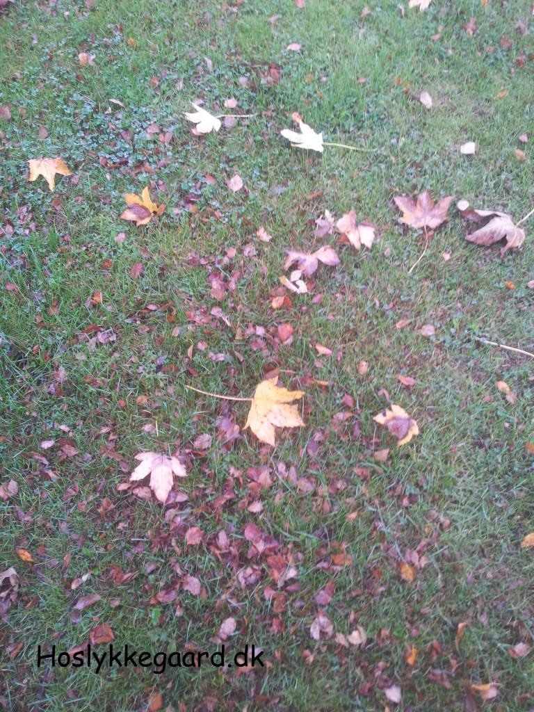 birketræ og spidsløn er ved at opgive