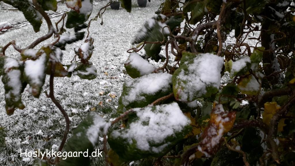 jo, det er sne