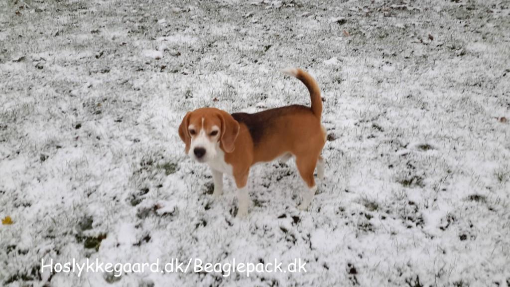 Darwin i den kolde sne