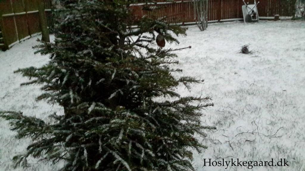 juletræet i sne
