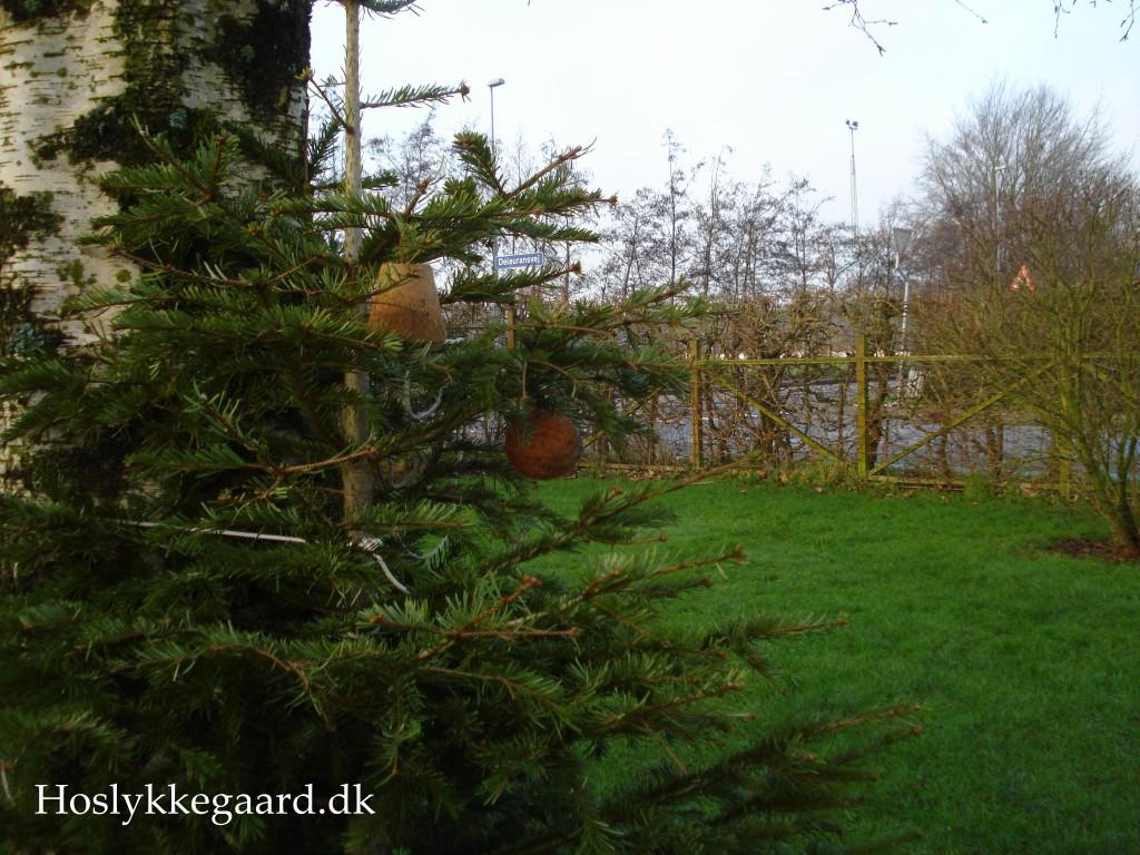 Juletræet er nu foder plads for havens fugle